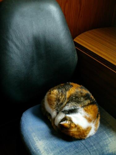 Gata a dormir na cadeira toda enrolada (é inverno