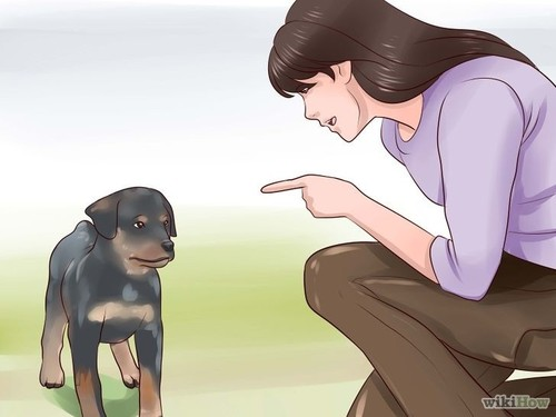 728px-Train-Your-Rottweiler-Puppy-With-Simple-Comm