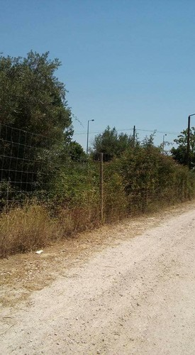 matagal 1.jpg