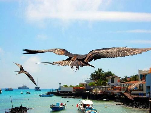 ilhas gal u00c1pagos    uma reserva de vida selvagem