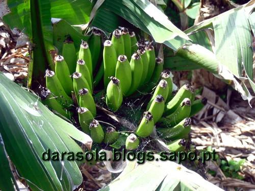 azores_flores_faja_lopo_Vaz_23.JPG