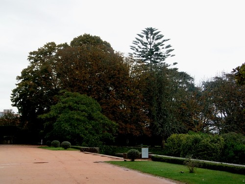 jardim 8.JPG