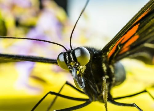 butterfly-376876_1920.jpg