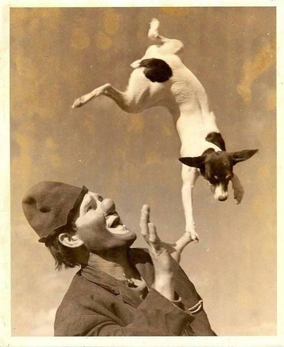 clown & dog.jpg