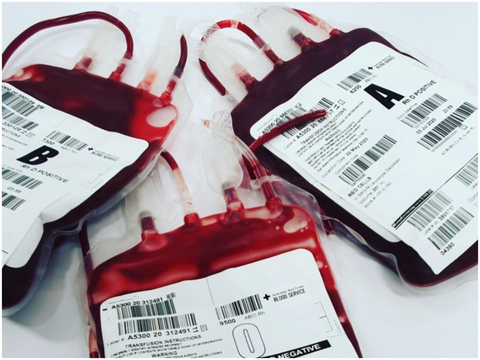 sangue gay dadores homossexuais  ispt.jpg