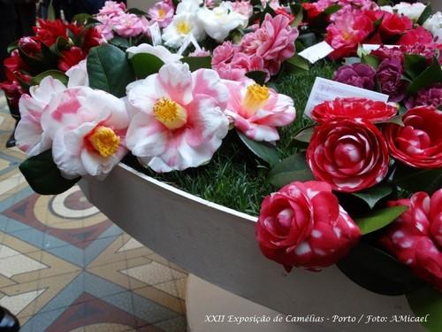 21 - XXII Exposição de Camélias - Porto - DSC01