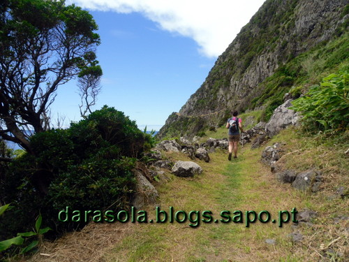 Azores_flores_faja_grande_06.JPG