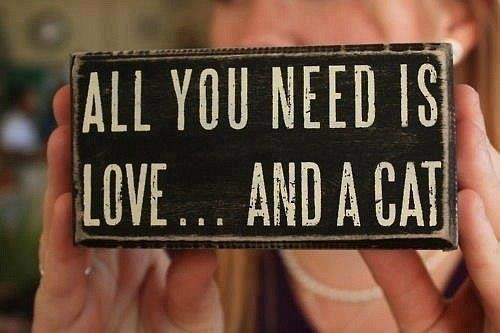 All you need is love.. and a Cat