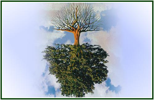 LIT-a-Árvore-Com-Raízes-No-Alto-COM-MOLD.png