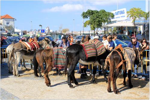 os burros de Cacilhas voltaram também