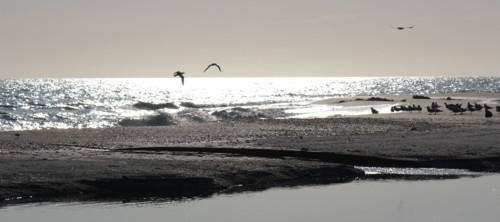 Ansel Adams - Birds on a Beach -