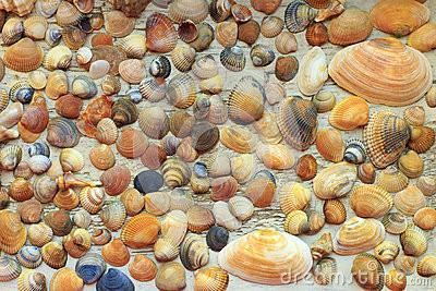 as-conchas-do-mar-coloridas-bonitas-recolheram-na-