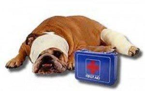 Sick-Dog-300x189-300x189.jpg