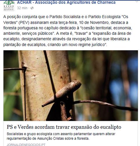 eucaliptos 2.png