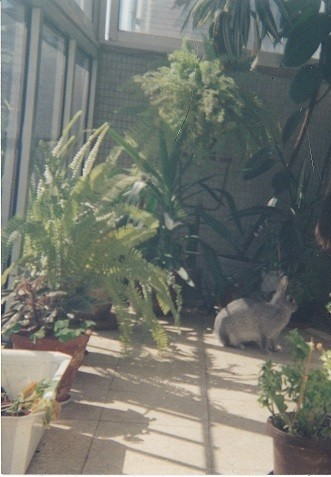 Coelha na varanda.jpg