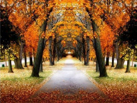 outono-estrada.jpg