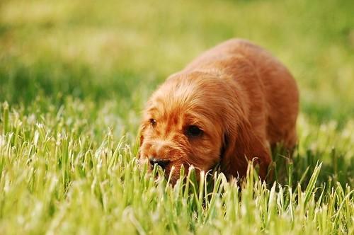 puppy-2414140.jpg