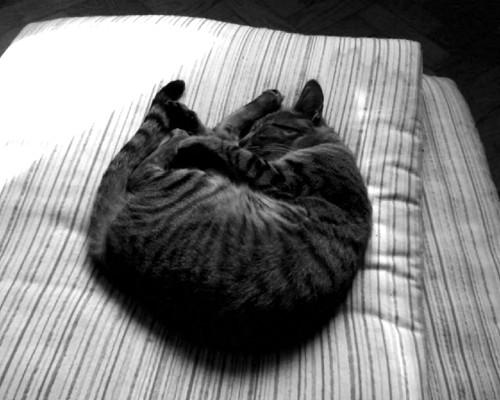 le_chat.jpg