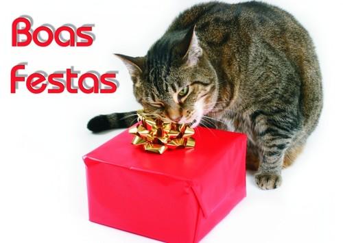 postal_gato_prenda.jpg