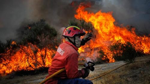 incendio_florestal_bombeiros_chamas.jpg