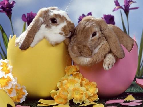Desejemos a todos uma Páscoa Feliz