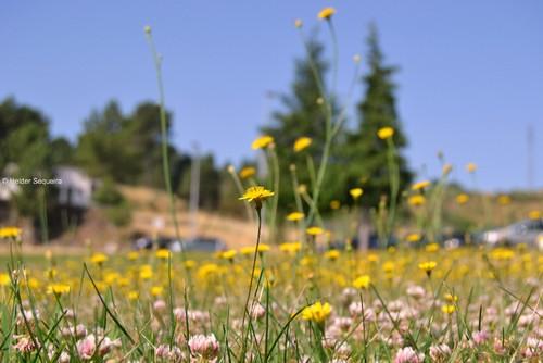 Flores HS.jpg