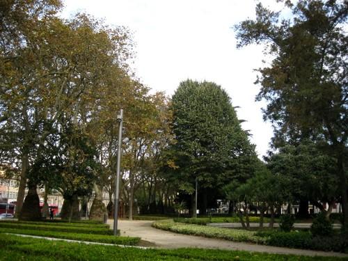 árvores (Cordoaria).JPG