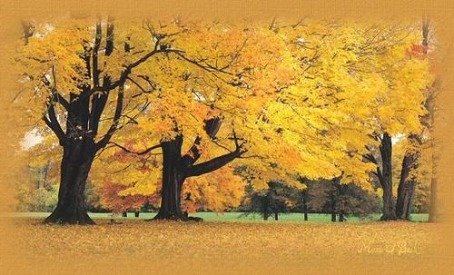 outono-paisagem.jpg
