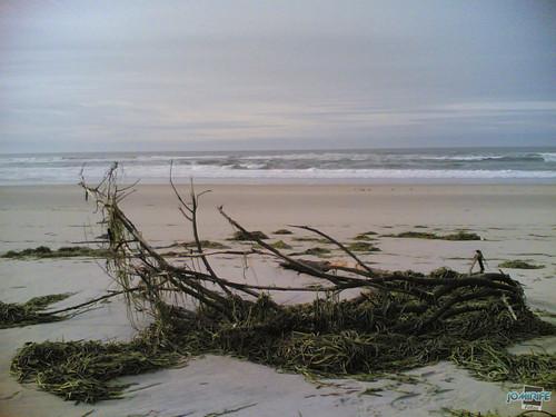 Temporal na praia do Cabedelo - Árvore na praia