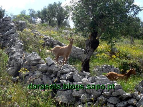 Buracas_Casmilo_05.JPG