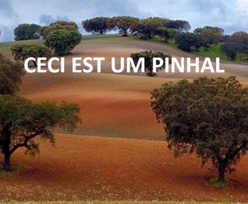 PINHAL.png