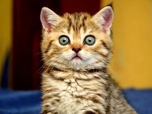 gato_surpreso.jpg