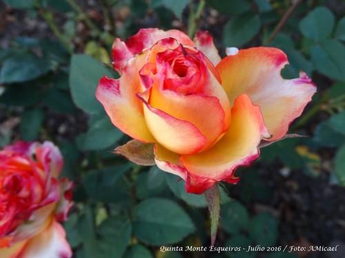 5 - Rosa - Maio 2016 - DSC00227.jpg