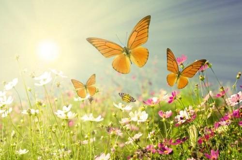 primavera-a-estacao-florida-do-ano-conheca-alguns-