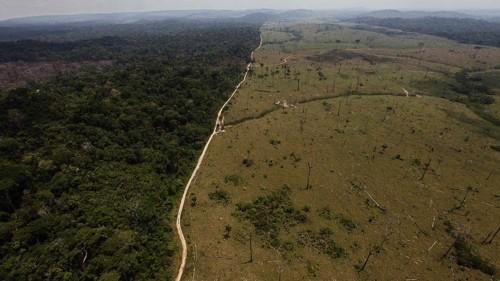o-desmatamento-da-amazonia-original.jpeg