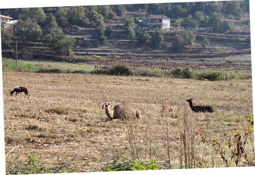 Rêgo Sêcco, Barcellos - (c) 2011