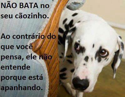 Não bata no seu cão