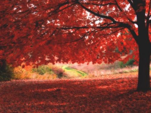 outono-2087.jpg