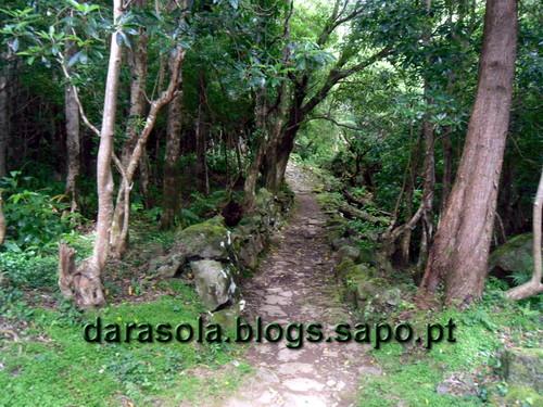 azores_flores_alagoinha_05.JPG