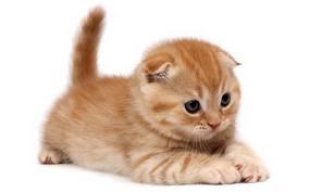 gatoquerido