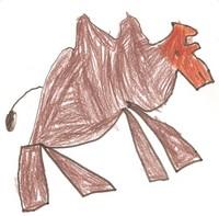 camelo 004