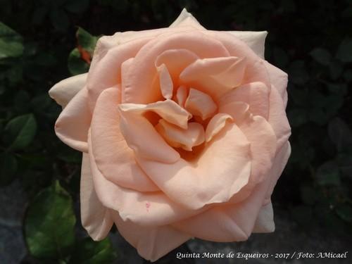 Rosas - Junho 2017 - DSC02514.jpg