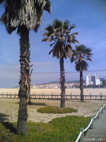 Oásis na praia da Claridade - Palmeiras