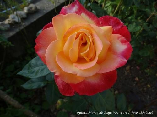 Rosas - Junho 2017 - DSC02515.jpg