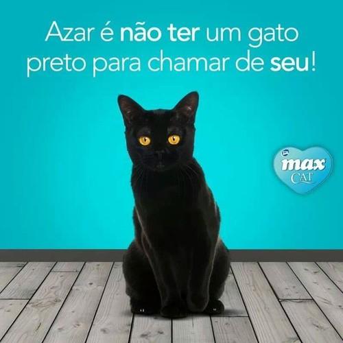 fotos-de-gato-preto-para-facebook.jpg