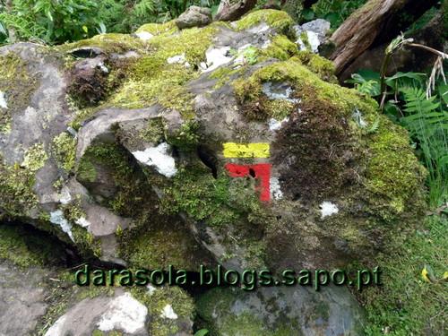 Azores_flores_faja_grande_18.JPG