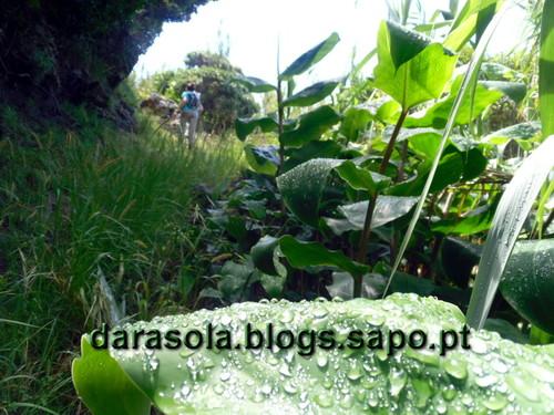 azores_flores_faja_lopo_Vaz_32.JPG
