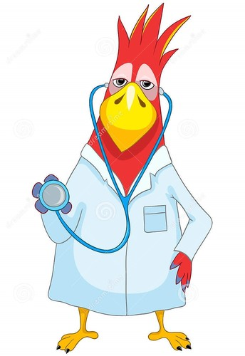papagaio-engraado-doutor-25200880.jpg
