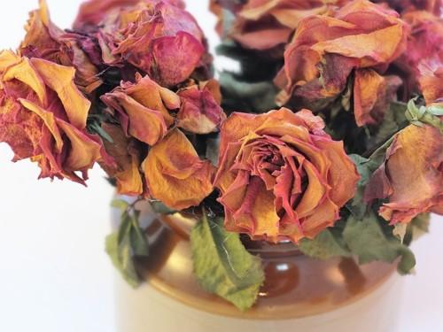 dried-roses-2008690_960_720.jpg