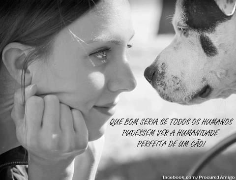 A humanidade perfeita do cão